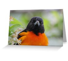 Baltimore Oriole & Apple Blossums Greeting Card