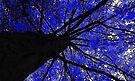 Midnight Tree by Marcia Rubin