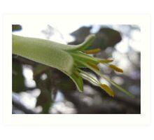 Green Australian Native Flower with Spiderwebs Art Print