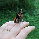 Red Admiral Buttefly by Michele Markley