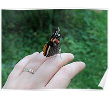 Red Admiral Buttefly Poster