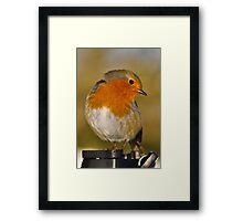 Modelling Robin Framed Print