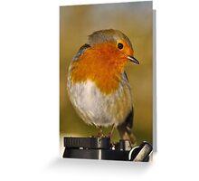 Modelling Robin Greeting Card