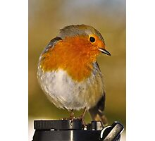 Modelling Robin Photographic Print