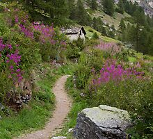 Hiking Trail, Zermatt by Tomas Abreu