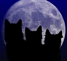 Black Cats of the Night by Edmond  Hogge