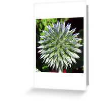 Cottage Garden Echinops Greeting Card