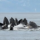 Giant Humpback Maws by Gina Ruttle  (Whalegeek)