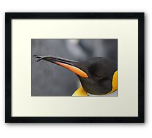 Penguin Framed Print