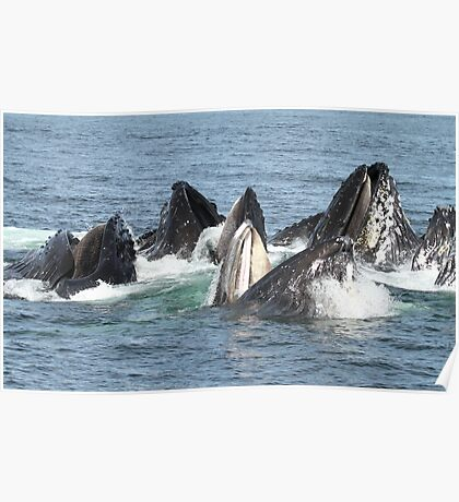 Satisfied Humpback Whales #2 Poster