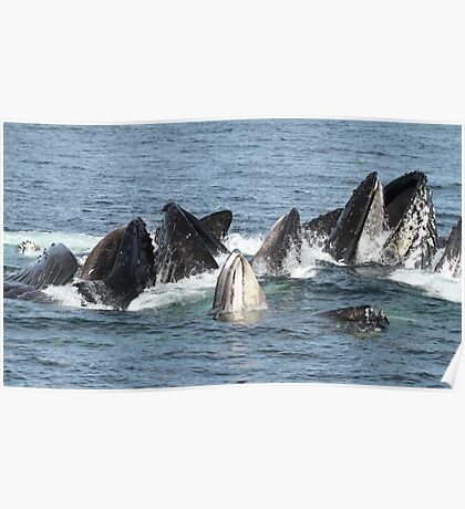 Satisfied Humpback Whales #1 Poster