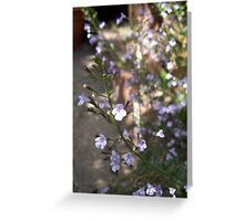 Cottage Garden Fennel & Catmint Greeting Card