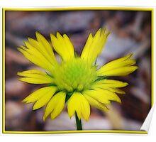 Splash of Yellow Poster