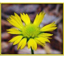 Splash of Yellow Photographic Print