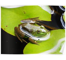 I Love Lily Pads Poster