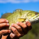 Smallmouth Bass from the Flathead River by amontanaview