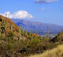 Sneaking Up on Tucson by John Carpenter