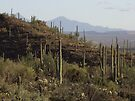 Hills are Alive -- with Cactus! by John Carpenter