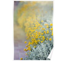 Sunshine flowers Poster