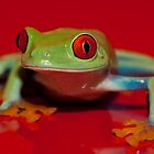 Colourful Frogs by Val Saxby