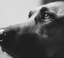 Puppy Eyes by melodykphotos
