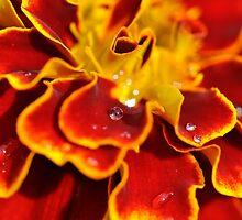 Colour explosion by Darren Bailey LRPS