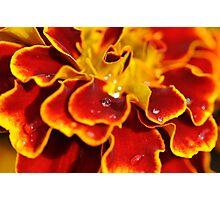 Colour explosion Photographic Print