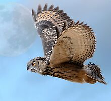 Eagle owl 'n' the moon by Darren Bailey LRPS