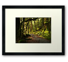 Enchanted Forest - Fiordland National Park Framed Print