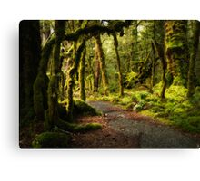Enchanted Forest - Fiordland National Park Canvas Print
