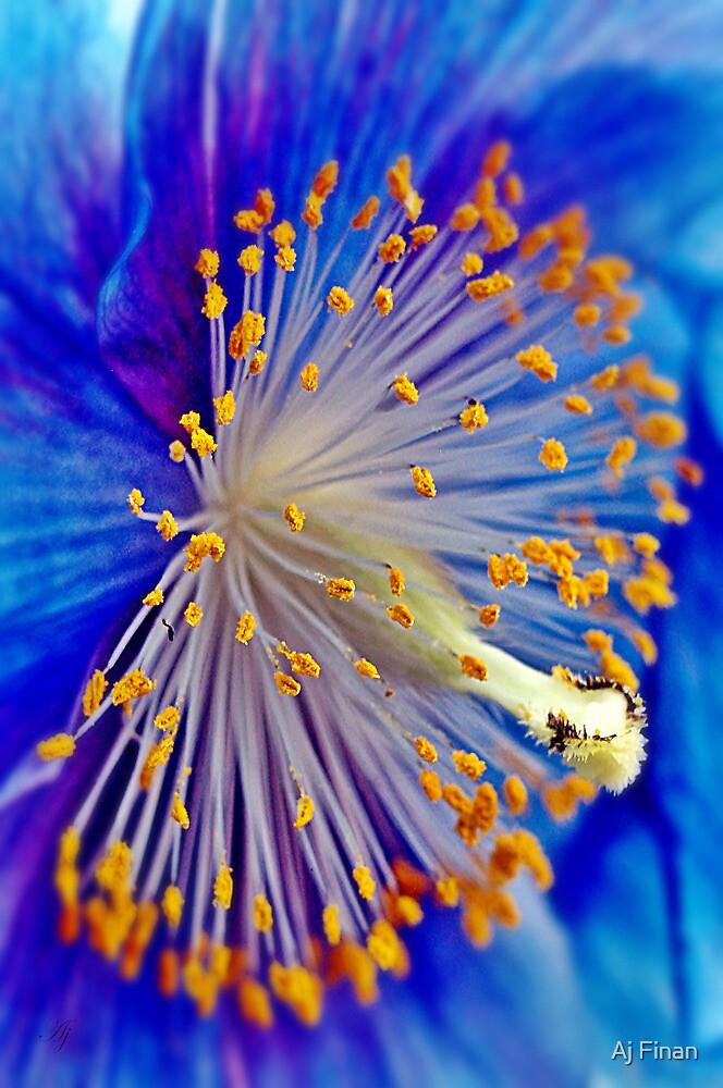 Blue Himalayan Poppy by Aj Finan