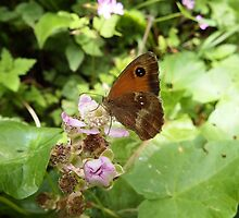 Gatekeeper Butterfly on a Bramble by DEB VINCENT