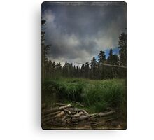 In the Stormy Meadow Canvas Print