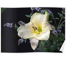Daylily and Mint in My Garden Poster