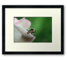 Cute frog peeking out of pink rose Framed Print