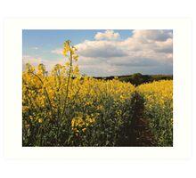 Rape Seed Fields - Northamptonshire Art Print
