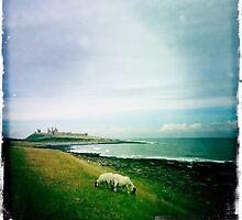 Sheep at Dunstanburgh by Woodsculptor