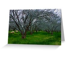 """""""Winter In The Orchard"""" Greeting Card"""