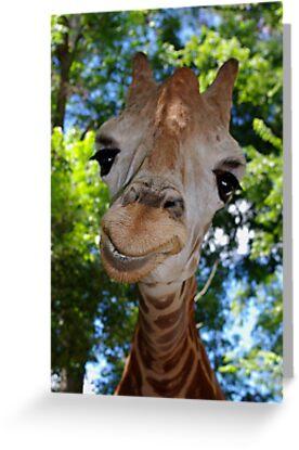 Giraffe Portrait V:  Keep on Smilin' by Alison M