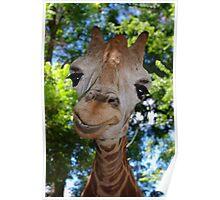 Giraffe Portrait V:  Keep on Smilin' Poster