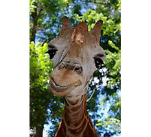 Giraffe Portrait V:  Keep on Smilin' Photographic Print