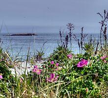 Ocean Roses by Monica M. Scanlan