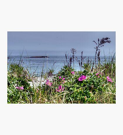 Ocean Roses Photographic Print