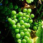 oregon wine by Jeannie Peters