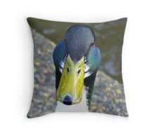 Quack Quack!! - Mallard Duck - invercargill - New Zealand Throw Pillow
