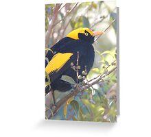 Male Regent Bowerbird Greeting Card