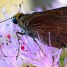 Celia's Roadside-Skipper by Penny Odom