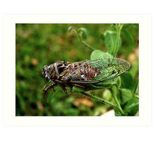 The Giant Cicada  Art Print
