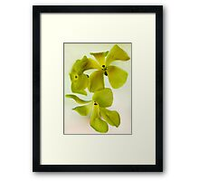 Sour Grass Framed Print