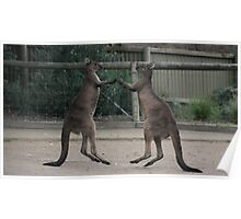 Who say's kangaroo's cant' fly... and dance Poster